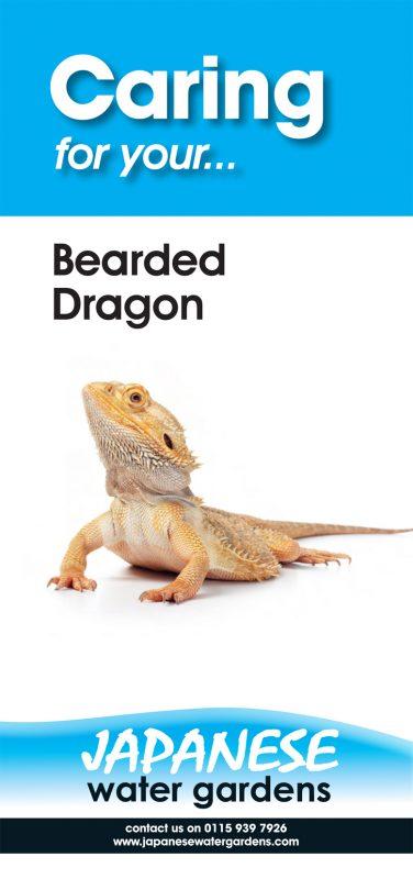 Bearded-Dragon-P1