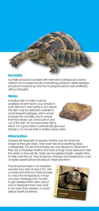 Tortoise-P4